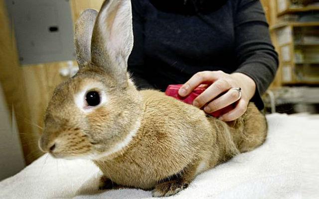 Уход за кролики декоративные в домашних условиях